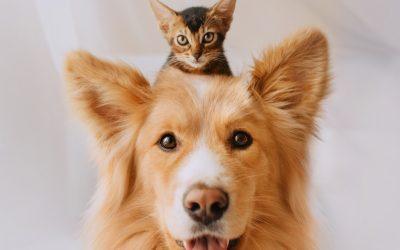 Você ama animais e já pensou em trabalhar no segmento pet? A Fórmula Animal listou 5 vantagens dessa escolha.