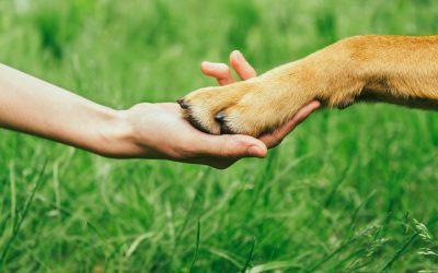 Farmácia de manipulação veterinária: o que é, como atua e quais são seus produtos?