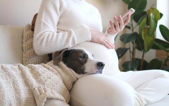 Como preparar seu animalzinho para a chegada do bebê